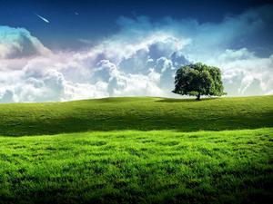 New Bliss Tree Green Landscape Scenery Wallpaper.