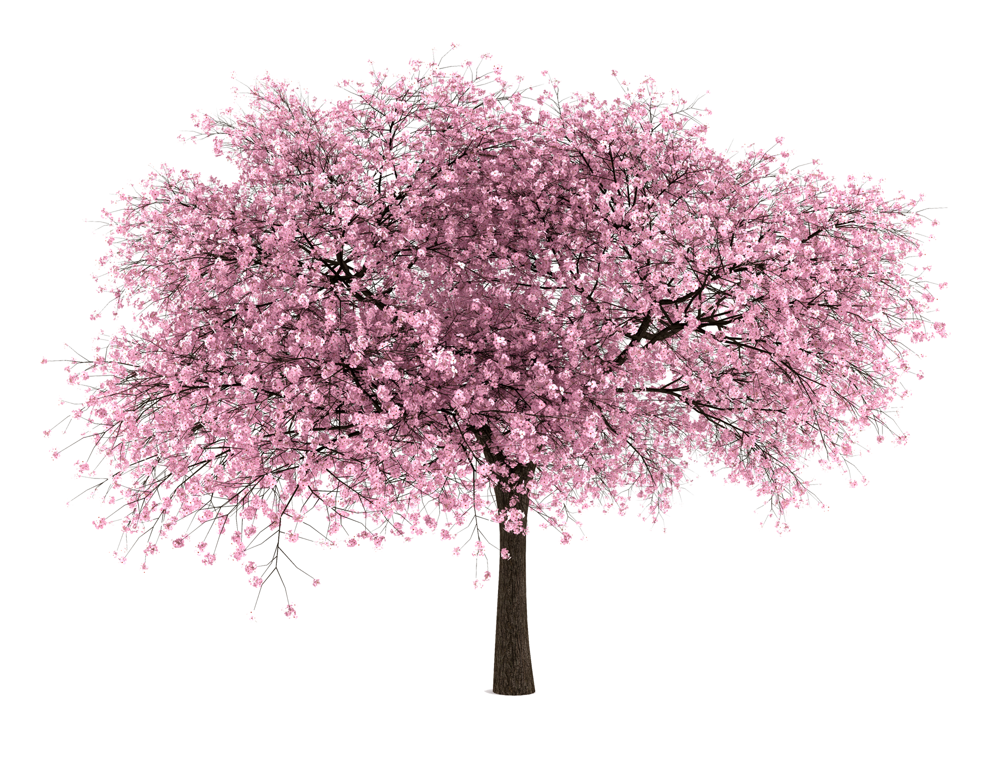 20 Free Tree PNG Images.