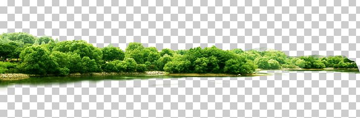 Landscape Greening PNG, Clipart, Brand, Cottonwood, Food.