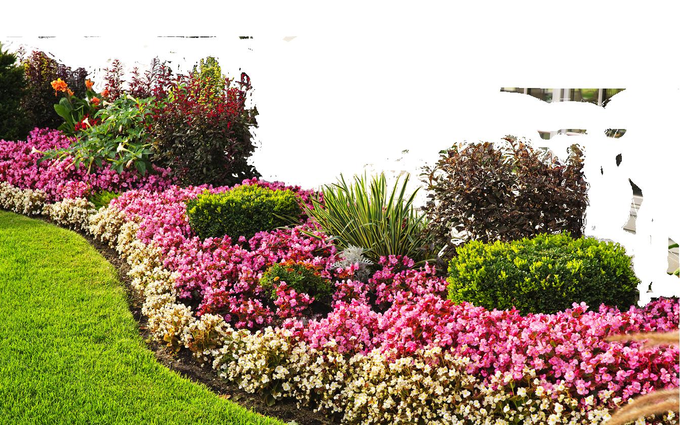 26 Best Landscaping Plants Png.