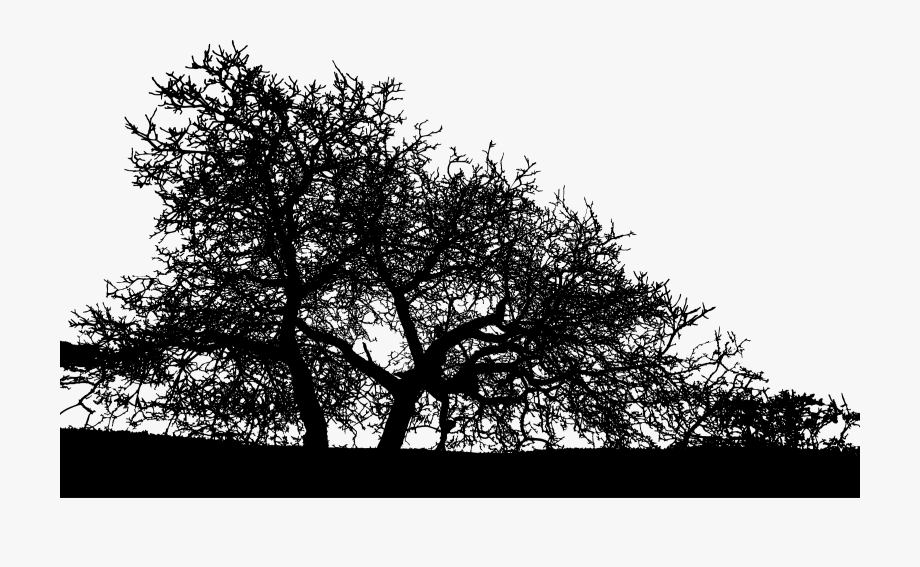 Trees Landscape Silhouette Banner Freeuse.
