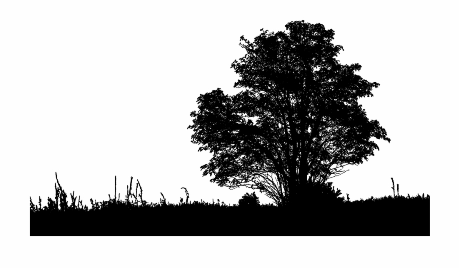 Tree, Landscape, Silhouette, Grass, Nature, Ecological.