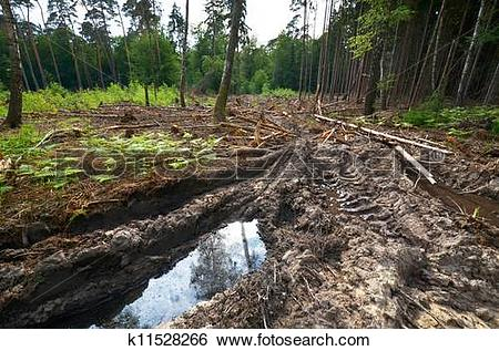 Stock Images of demaged forest soil k11528266.