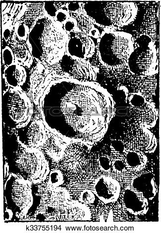 Clipart of Moon of tycho crater, vintage engraving. k33755194.