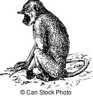 Langur Clip Art and Stock Illustrations. 25 Langur EPS.