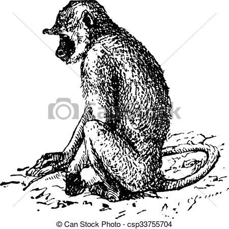 Langur Vector Clip Art Illustrations. 20 Langur clipart EPS vector.