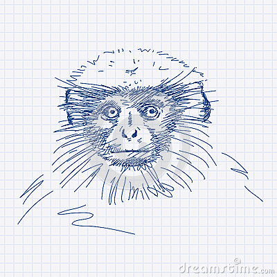 Langur Stock Illustrations.