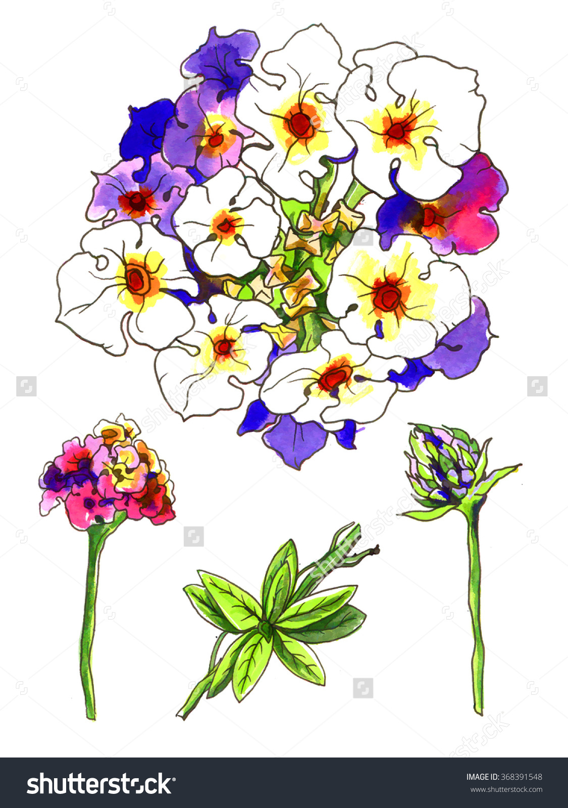 Pink Purple Lantana Camara Tropical Flower For Wedding Printing.