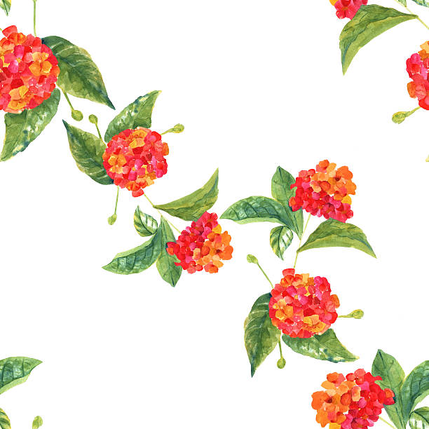 Lantana Flowers Background Clip Art, Vector Images & Illustrations.