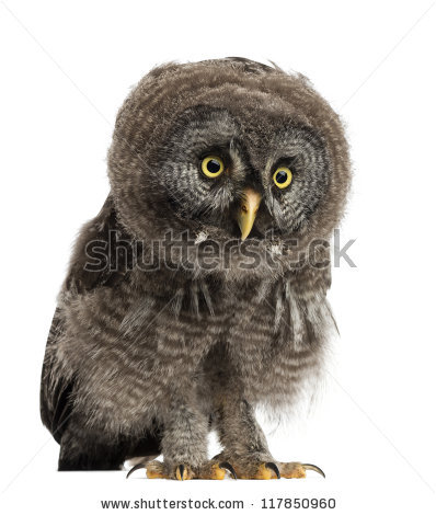 Owl Chick Stock Photos, Royalty.