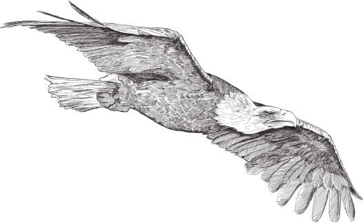 L'aquila Clip Art, Vector Images & Illustrations.