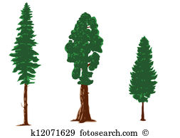 Larch Clip Art Royalty Free. 84 larch clipart vector EPS.