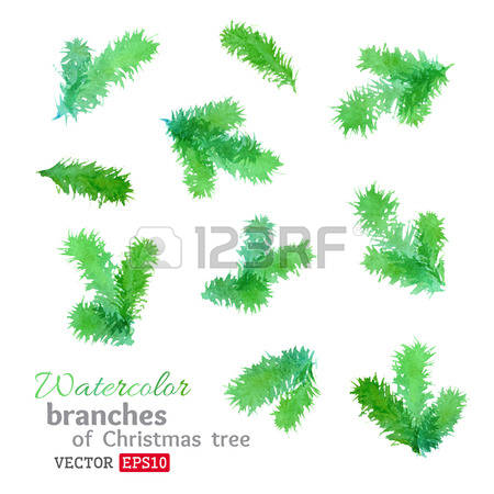 425 Larch Stock Vector Illustration And Royalty Free Larch Clipart.