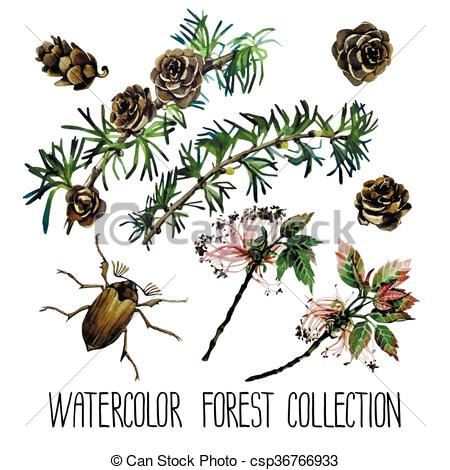 Vectors of Watercolor forest set. Insects among larch cones and.