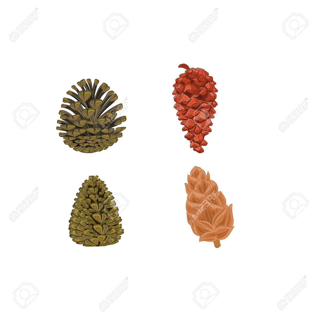 Four Pine Cones Larch Cones Vector Illustration Royalty Free.
