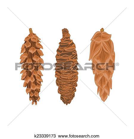 Clipart of Four pine cones larch cones vector k23339173.