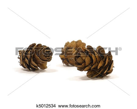 Stock Photo of larch cones k5012534.