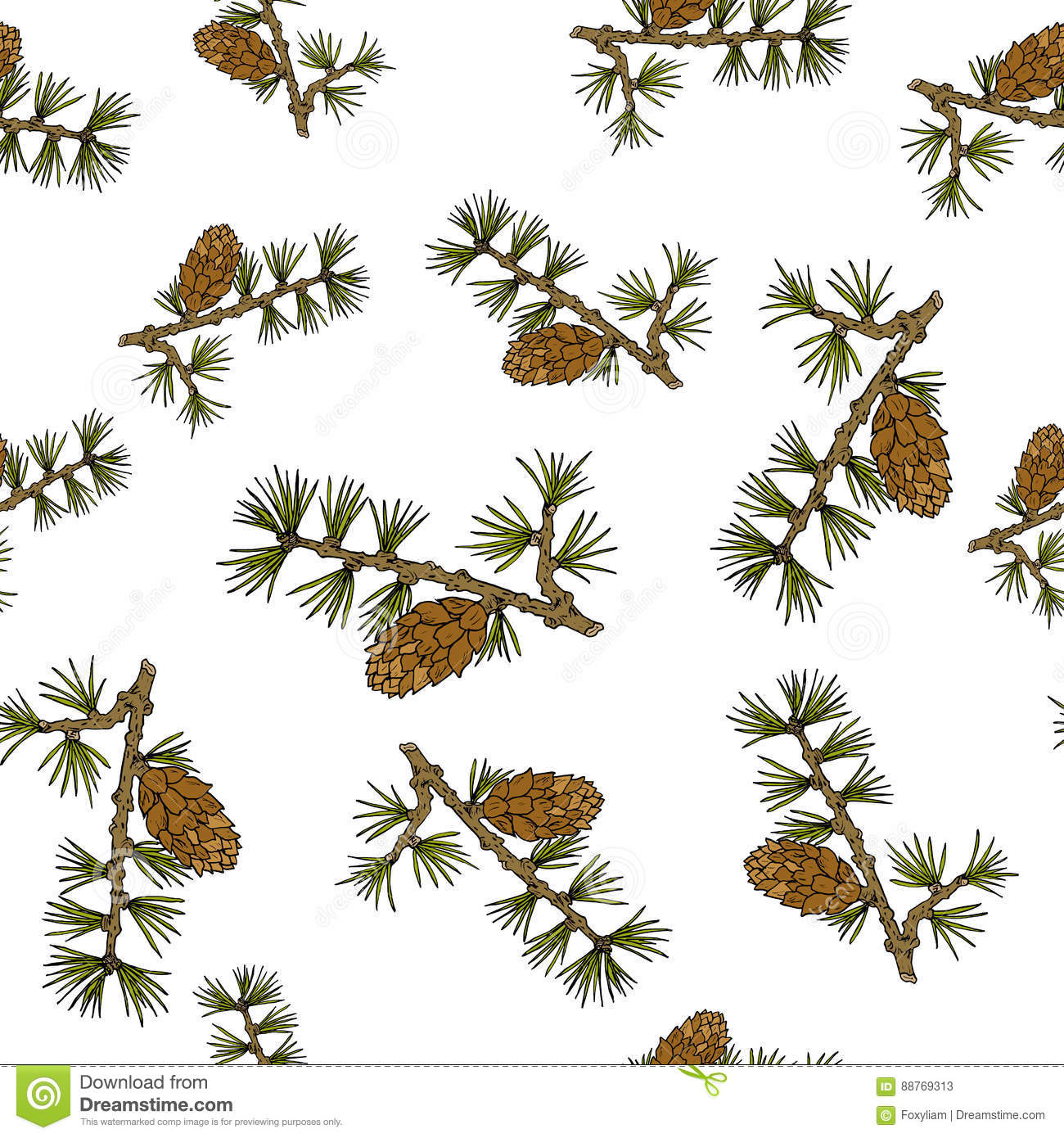 Larch Cones And Branches Stock Vector.