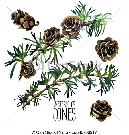 Vector Clip Art of Watercolor larch cones and branches isolated on.