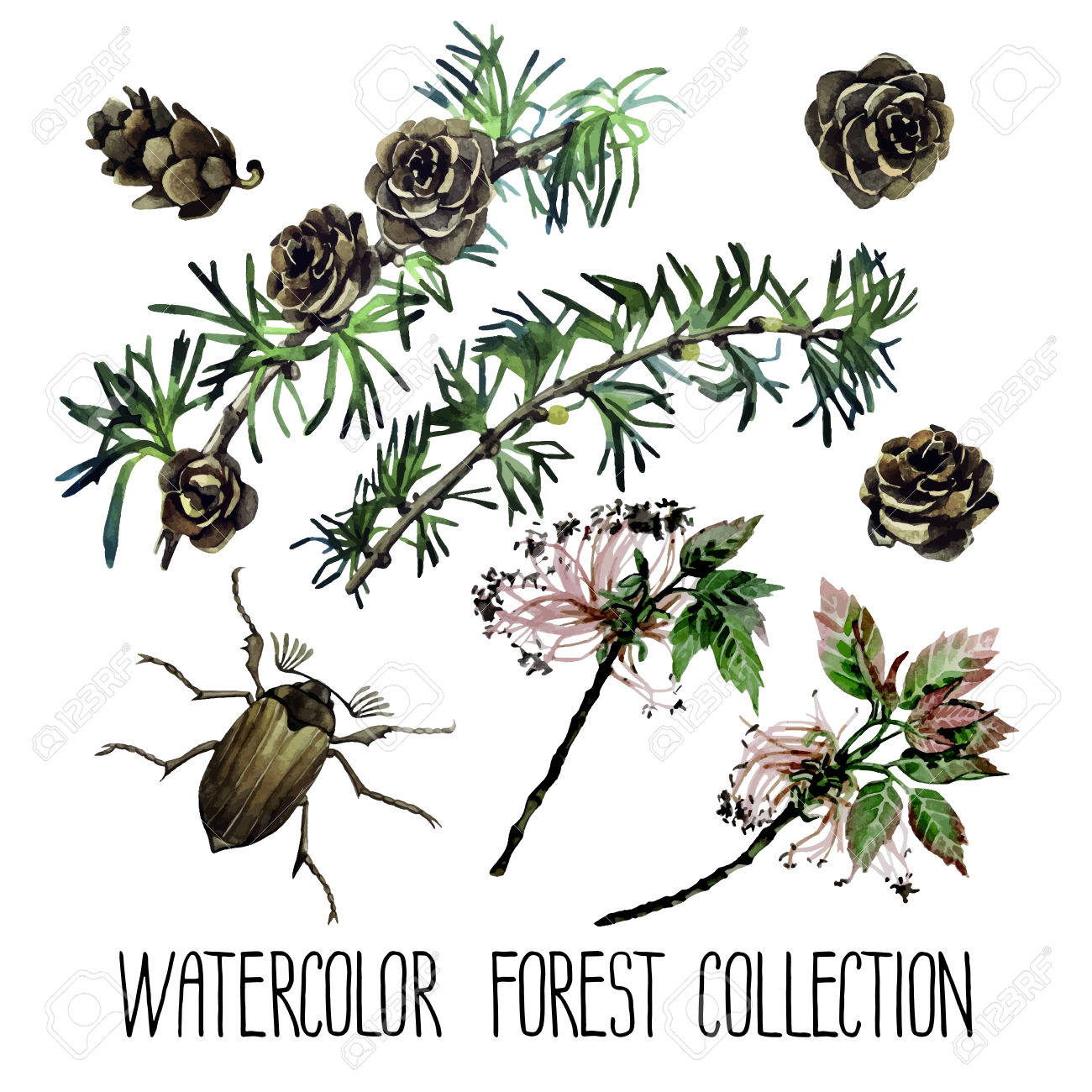 Watercolor Forest Set. Insects Among Larch Cones And Foliage.