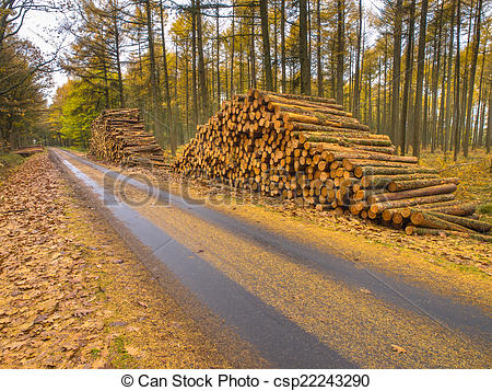 Stock Photographs of Stacks of Timber in a Yellow Colored Larch.