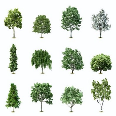 Tree png images download.