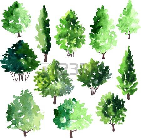 377 Larch Tree Stock Vector Illustration And Royalty Free Larch.