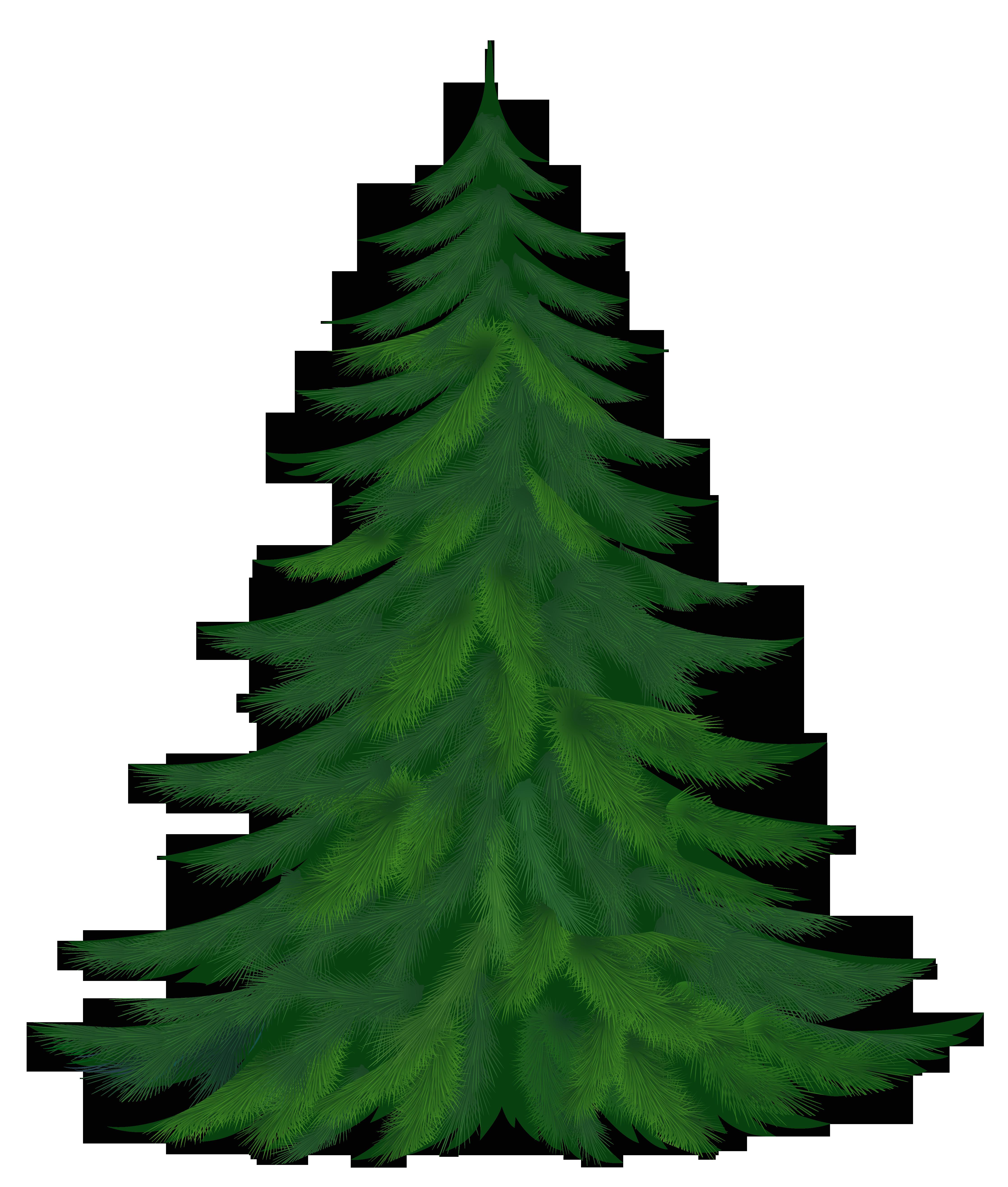 Pine Trees Clip Art.