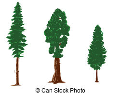 Larch Illustrations and Clip Art. 148 Larch royalty free.