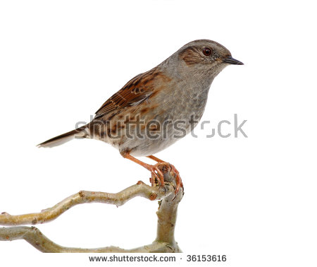 Small Bird Isolated Stock Photos, Royalty.