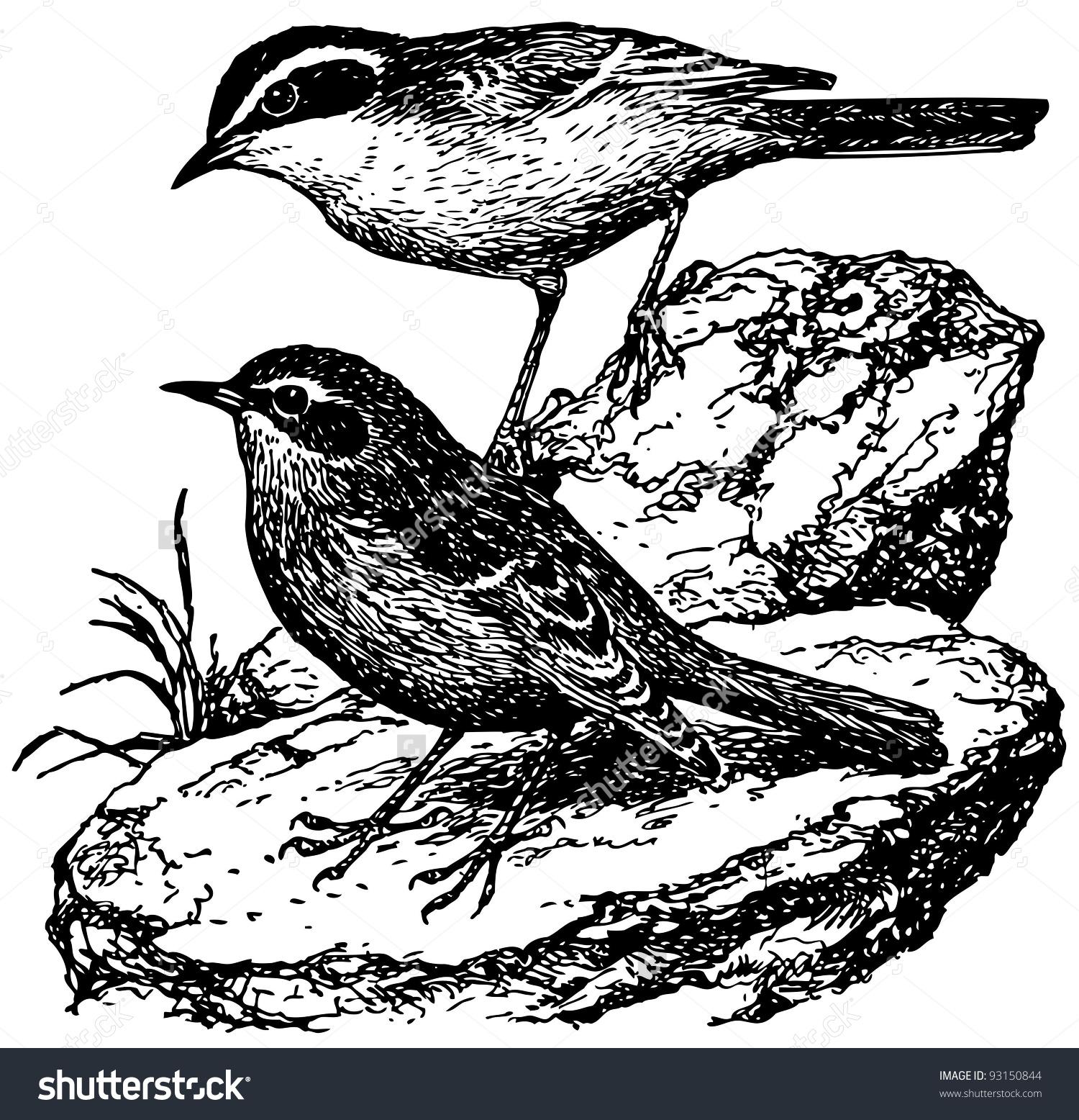 Bird Brown Accentor Stock Vector 93150844.