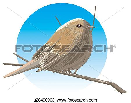 Drawing of Japanese accentor perching on branch, side view.
