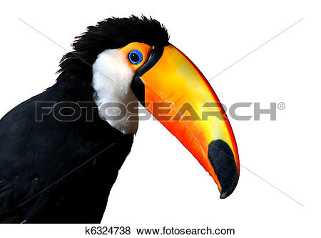 Pictures of Colorful Caribbean Toucan with large orange beak.