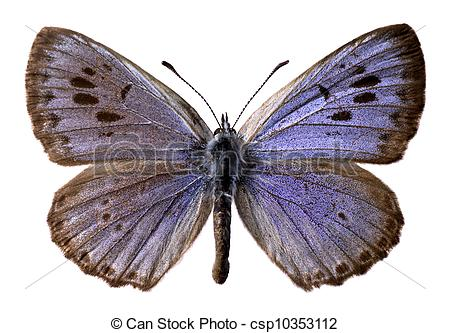 Clipart of Isolated large blue butterfly (Maculinea arion) on.
