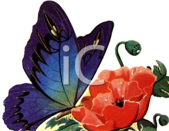 Large Blue Butterfly on a Poppy Flower Clip Art.