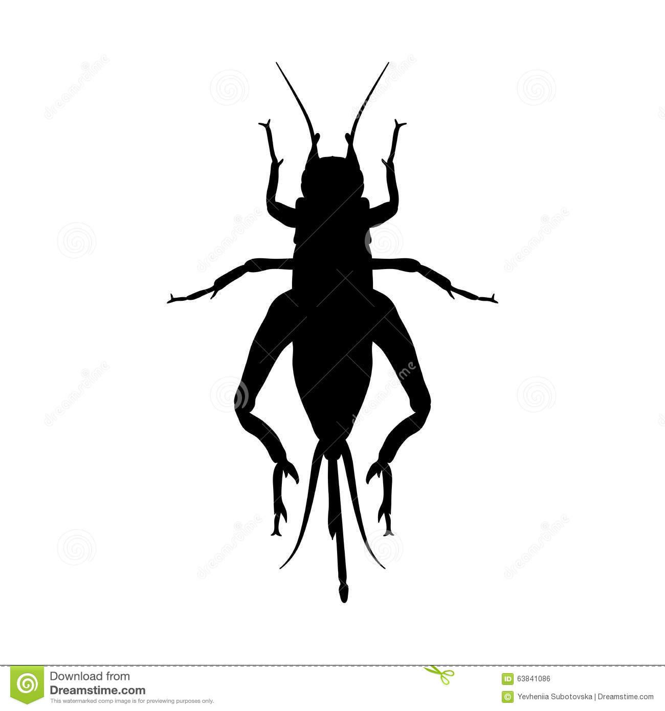 Locusts Stock Illustrations.