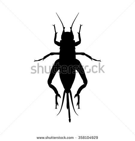 Cricket Insect Stock Photos, Royalty.