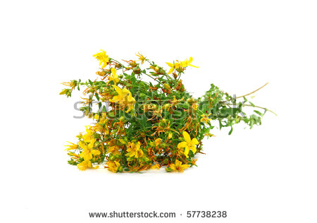 St Johns Wort Isolated Stock Photos, Royalty.