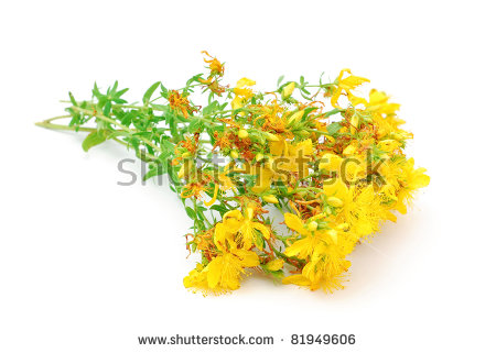 St John's Wort Stock Photos, Royalty.