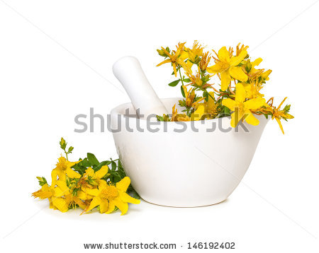 St Johns Wort Plant Stock Photos, Royalty.