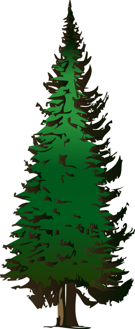 Evergreen Tree Clipart Free.