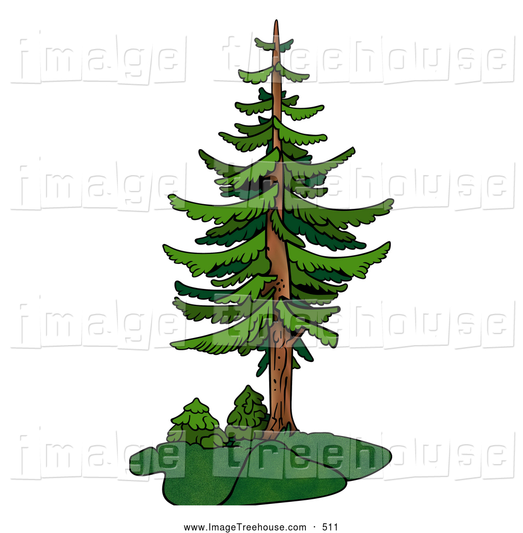Large evergreen clipart - Clipground