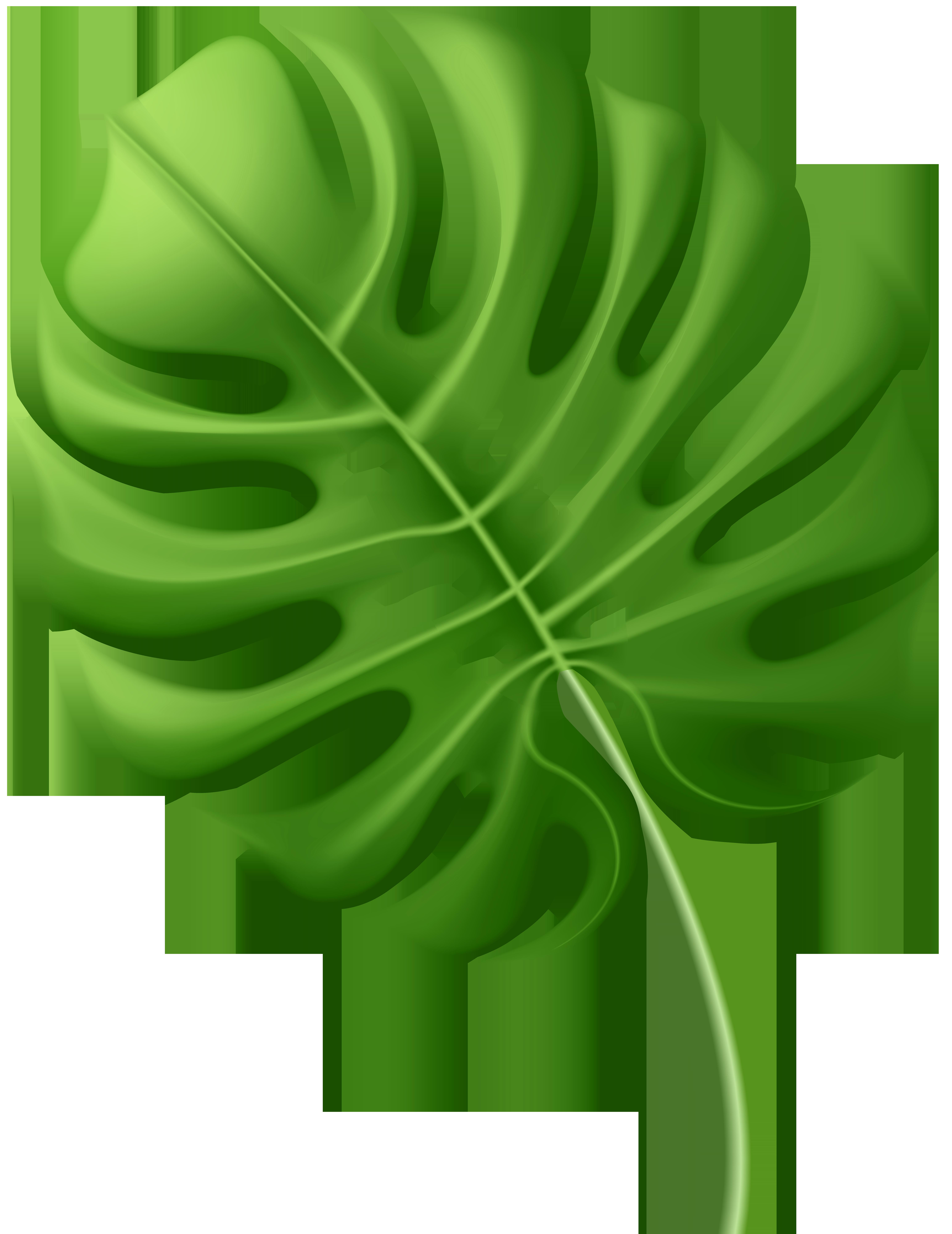 Large Tropical Leaf PNG Clip Art Image.