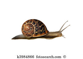 Garden snail Clip Art and Stock Illustrations. 271 garden snail.