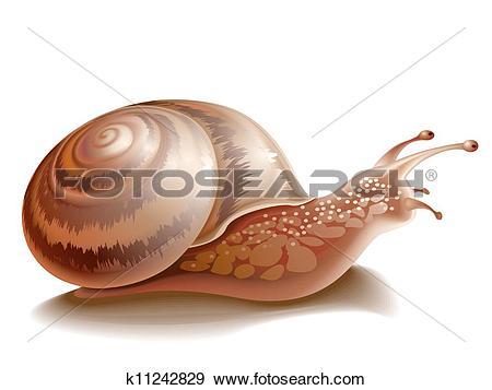 Clip Art of Garden snail k11242829.