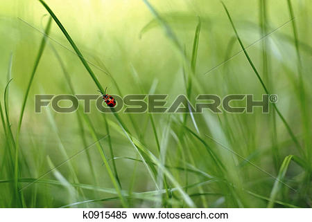 Stock Image of red bug climbing a blade of grass in a green.