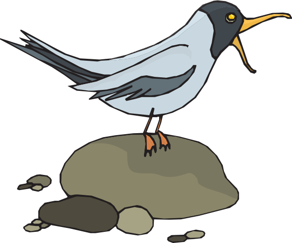Screeching Gull Clip Art at Clker.com.