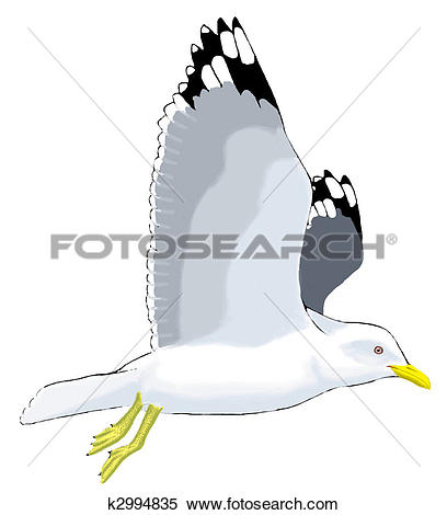 Stock Illustration of Mew Gull k2994835.