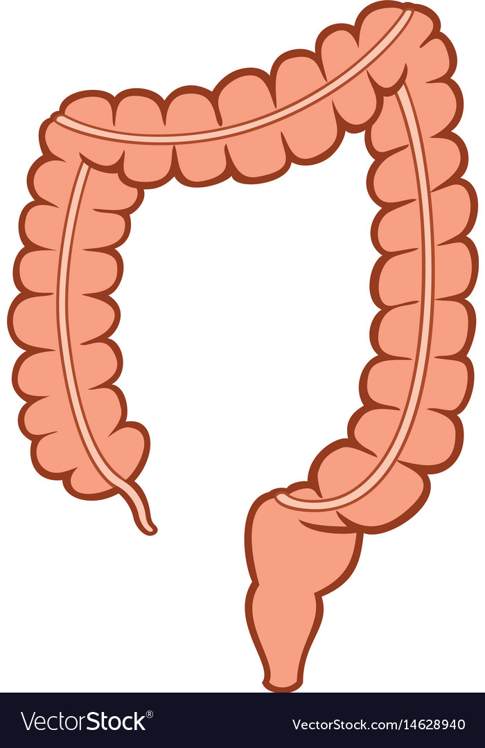 Large intestine clipart 4 » Clipart Station.