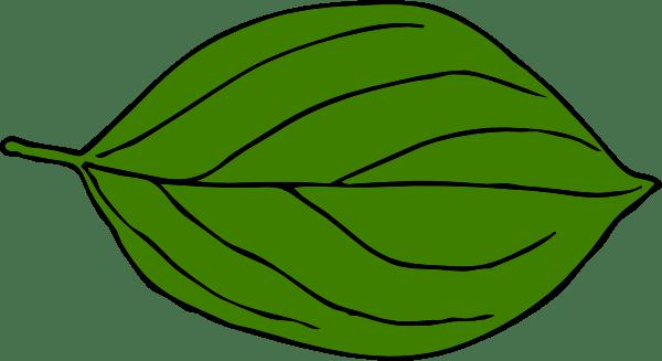 Large leaf clipart 2 » Clipart Portal.